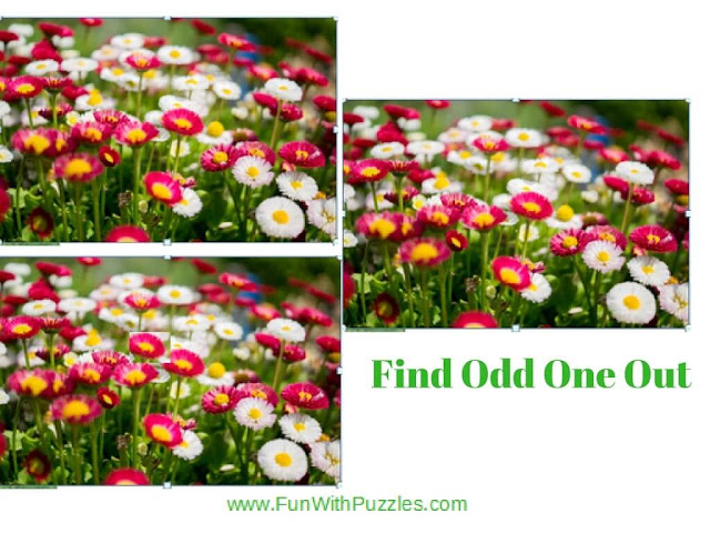 Spot The Difference Picture Brain Teaser Flowers