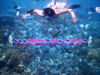 foto snorkeling bersama ikan di karimun jawa