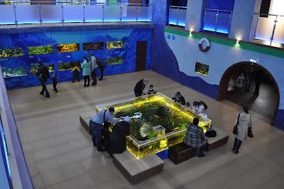 Челябинский аквариум на ЧМЗ