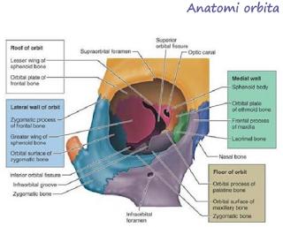 Anatomi Orbita
