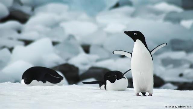 Οι πιγκουίνοι και το μυστήριο της ακοής τους
