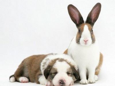 Kitten Puppy Bunny | Kitten And Puppy