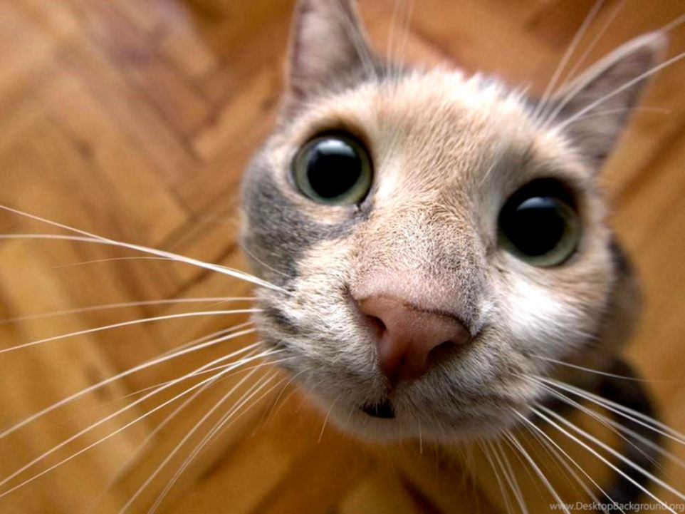 HD Funny And Cute Cat Wallpapers – Desktop Background