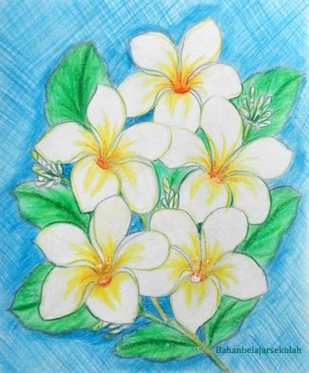 Menggambar Bunga Kamboja Memakai Pensil Warna Mata Pelajaran