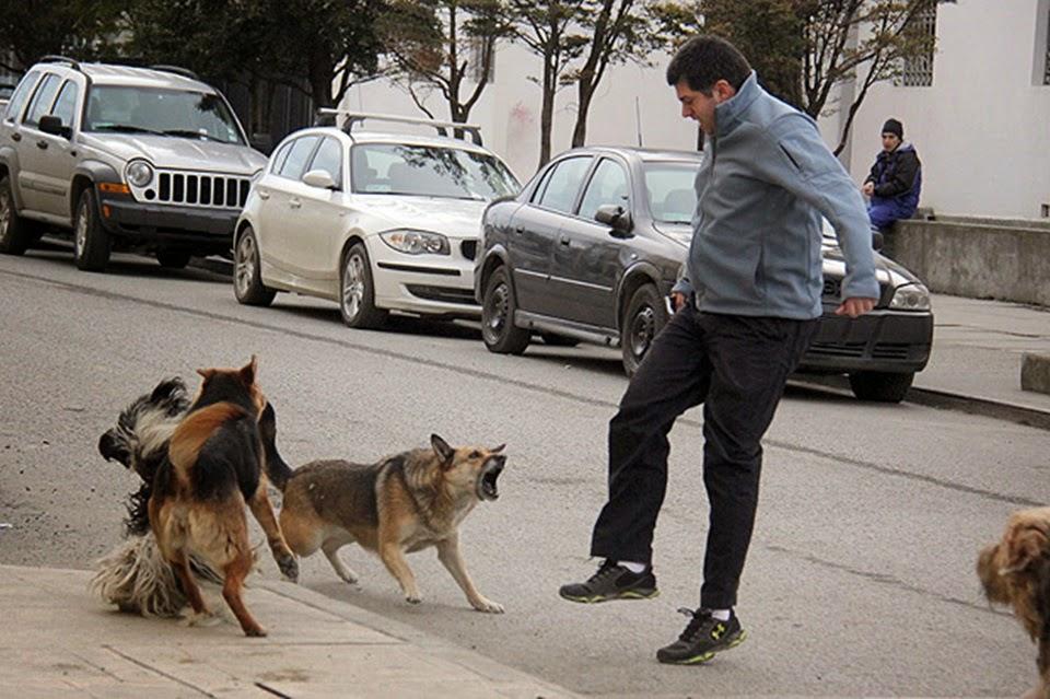 Perros sueltos Ushuaia 16 denuncias por dia