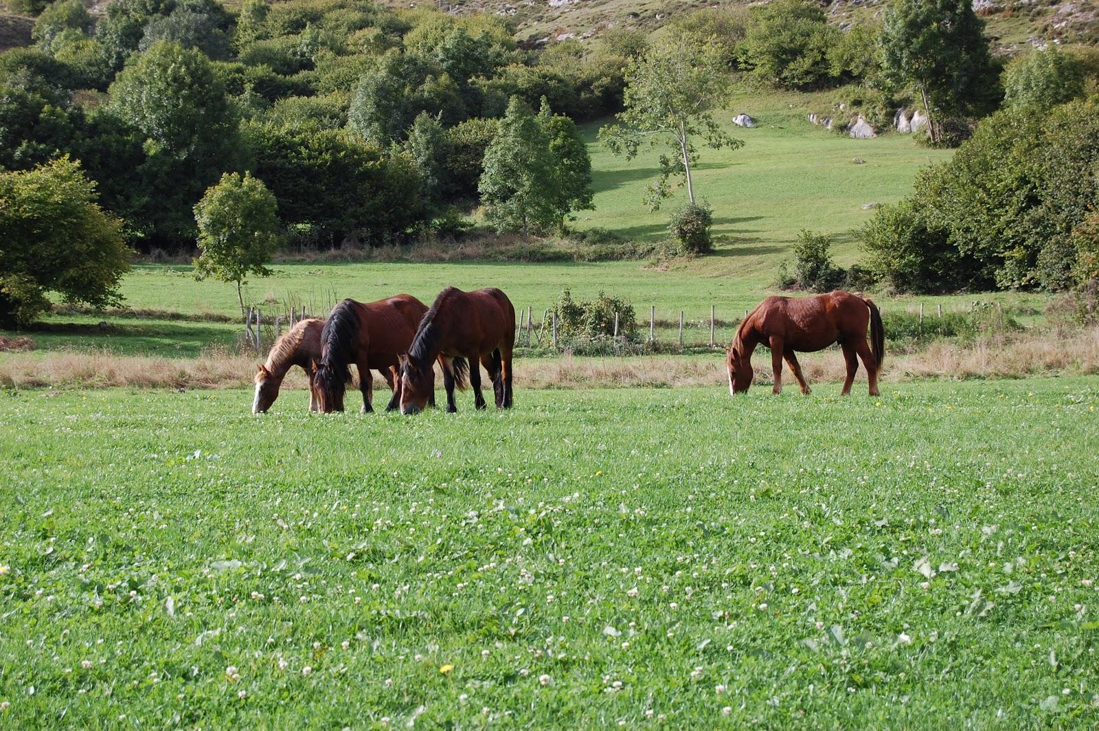 Caballos en Tresviso