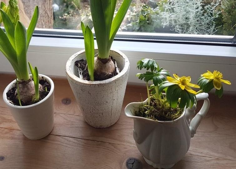 Erste Blüten schon im Winter