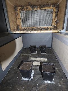 Photo 3 : pots de ponte dans une boite de reproduction