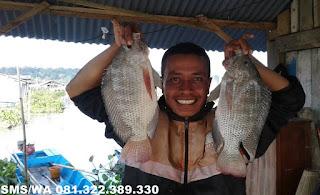 Essen Aroma Sereh Untuk Ikan Nila Babon