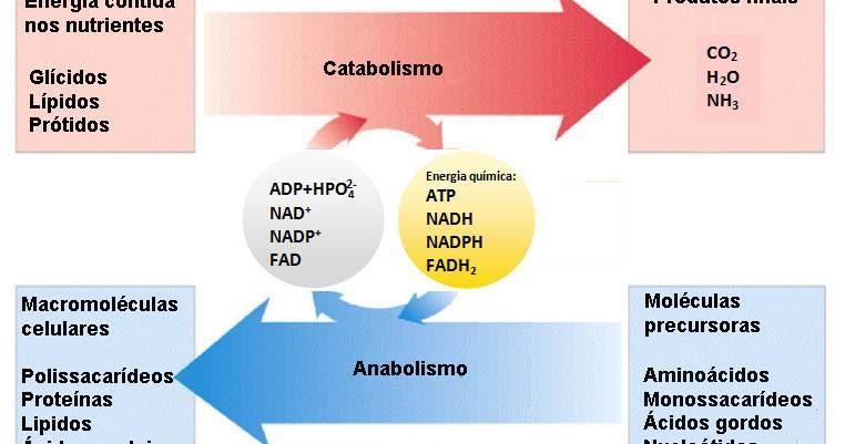 Cure como activar el metabolismo con la naturaleza