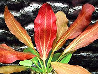 live aquarium plants for sale