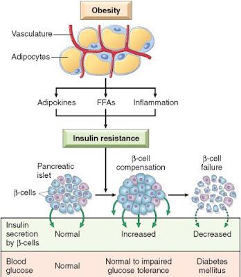 Proses Terjadinya Resistensi Insulin