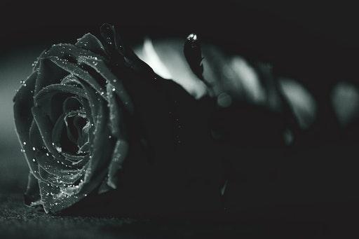 mawar hitam gugur fiksi depresi