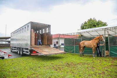 Em SP, caminhões Atego da Mercedes-Benz são destaques em transporte de cavalos no Clube Hípico