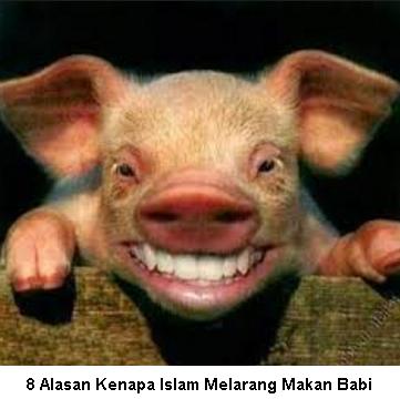 Alasan-Islam-Melarang-Makan-Babi