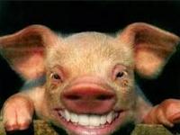 FAKTA, 8 Alasan Mengapa Islam Melarang Makan Babi...!!!