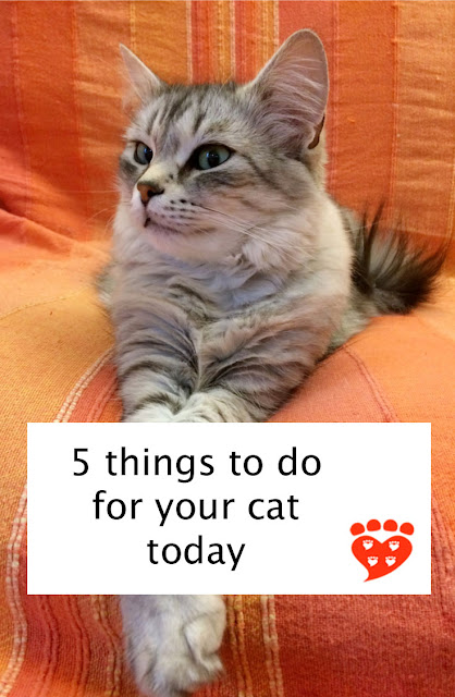 5 things to do for your cat today to provide enrichment, play time and hiding places. A beautiful kitten sits with its paws crossed.