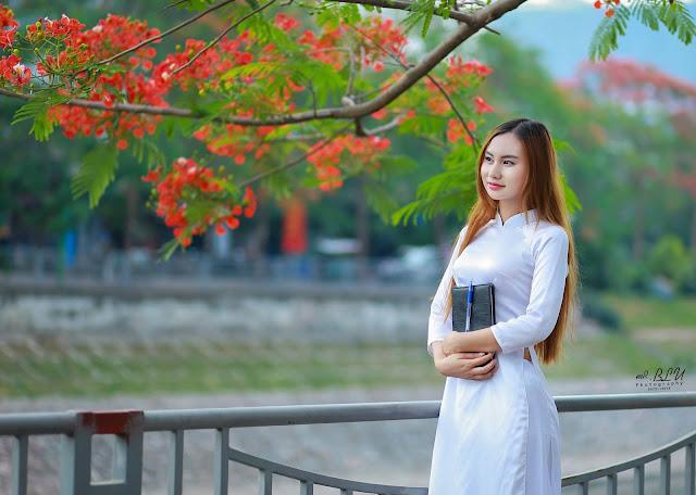 hoa phuong do