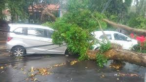 mobil tertimpa pohon akibat badai