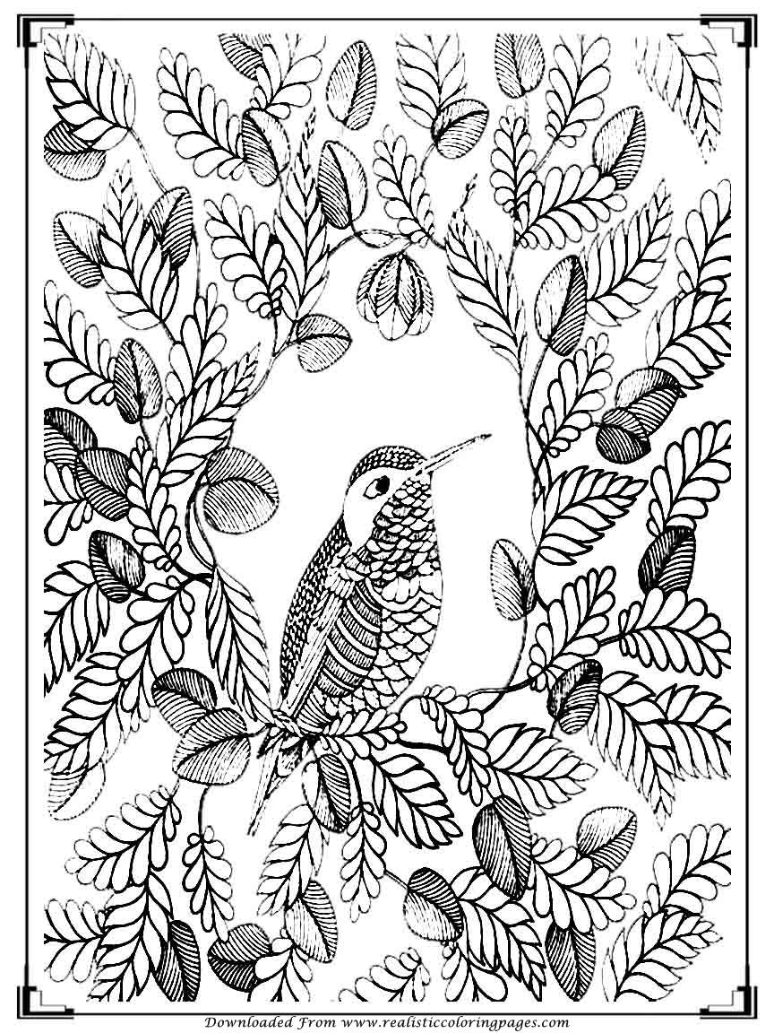 Printable Birds Coloring Pages For Adults  Realistic -9835
