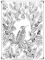 coloring pages adults bird printable