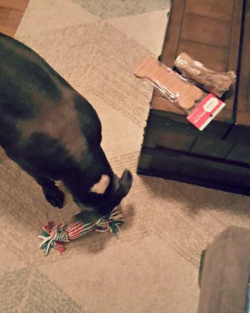 dog treats from Santa