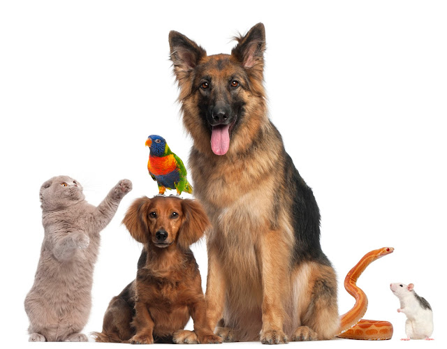 Perawatan Alami Untuk Segala Macam Hewan