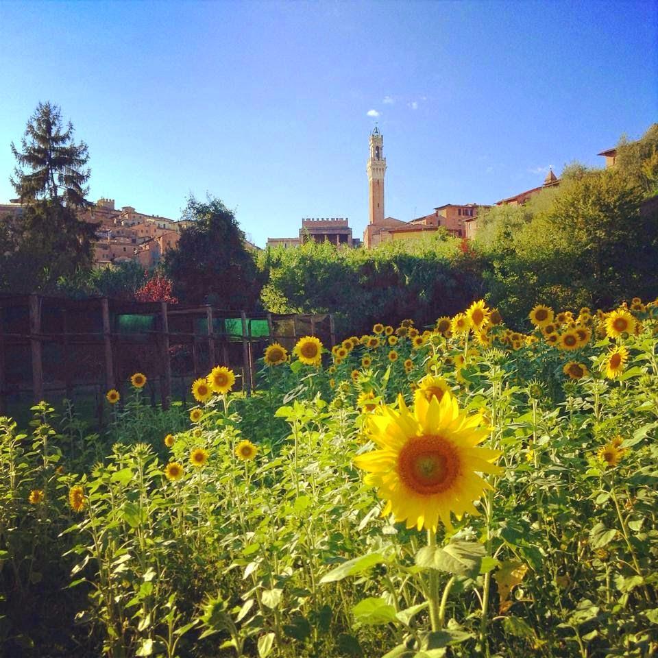 Siena: Orto de' Pecci