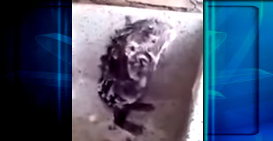 Vídeo de rato tomando banho igual gente viraliza na internet - Capa