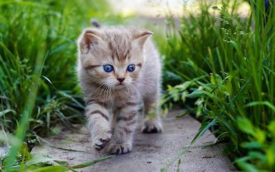 cat-wondering-in-the-garden-images