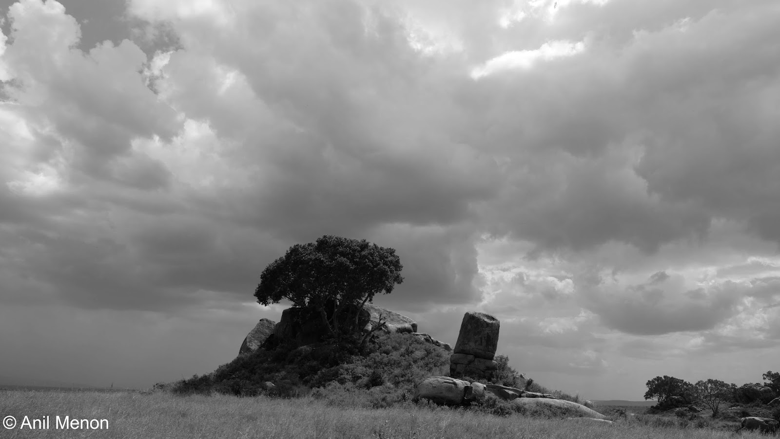 A black and photo of a tree surrounded by endless plains in Tanzania
