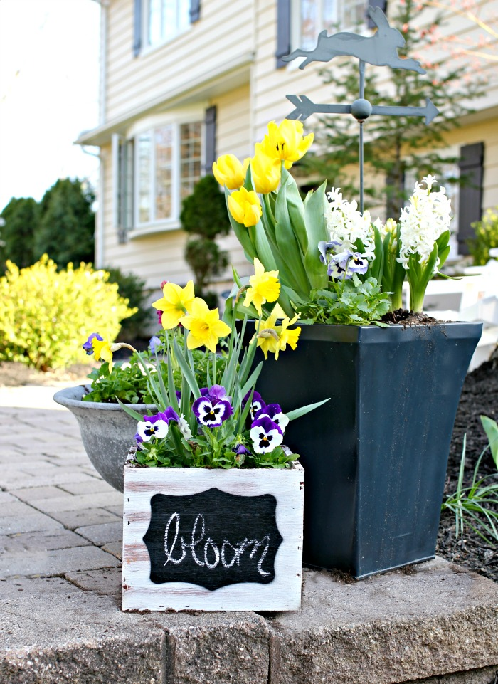 Daffodils and pansies in planters - www.goldenboysandme.com