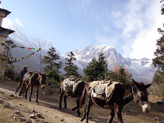 Scenery of the manaslu trek with the Donkey