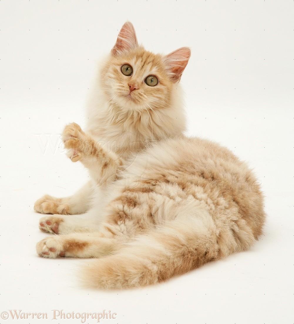 Foto Anak Kucing Lucu Dan Imut Terbaru Display Picture