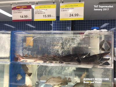 Live farmed B.C. sturgeon, T&T Supermarket
