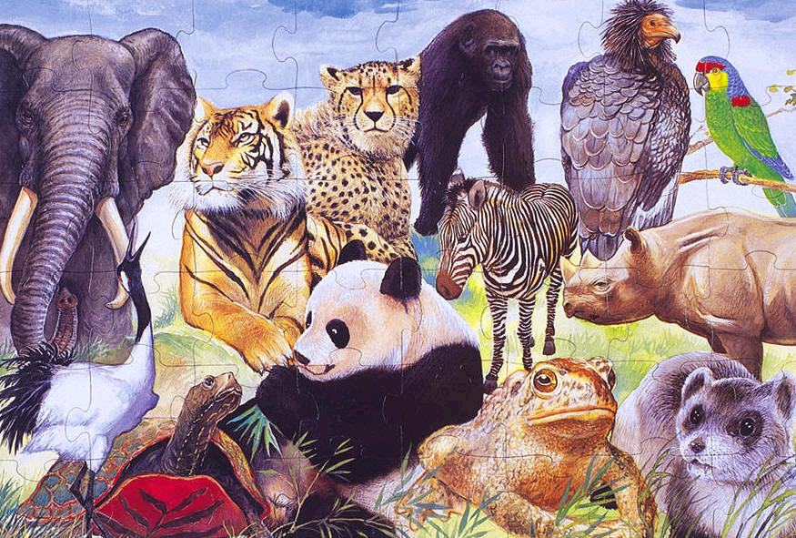 Almost extinct animals in the world