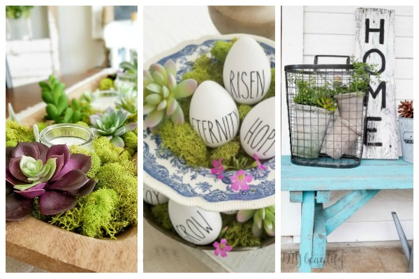 succulents for spring decor