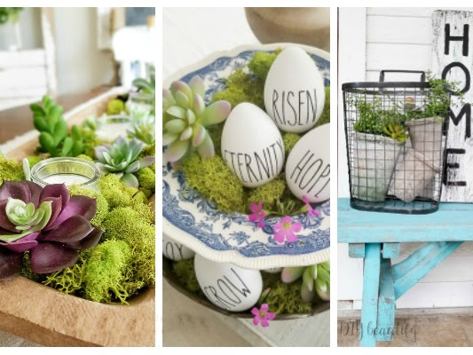 How to Use Succulents in Home Decor