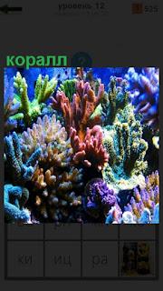 на дне под водой находятся несколько цветных кораллов
