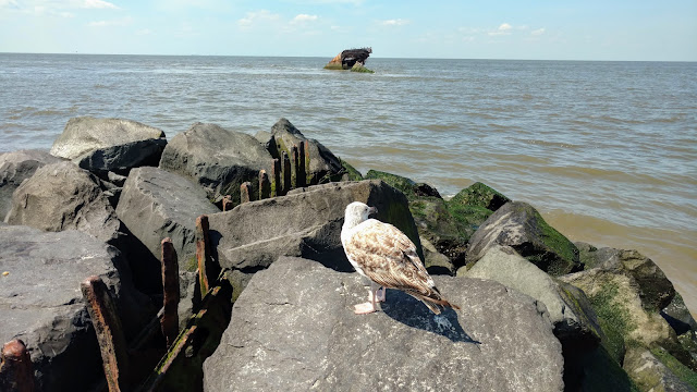 """Цементний корабель """"Atlantus"""", Сансет Біч, Нью Джерсі  (Sunset Beach, Cape May, NJ)"""
