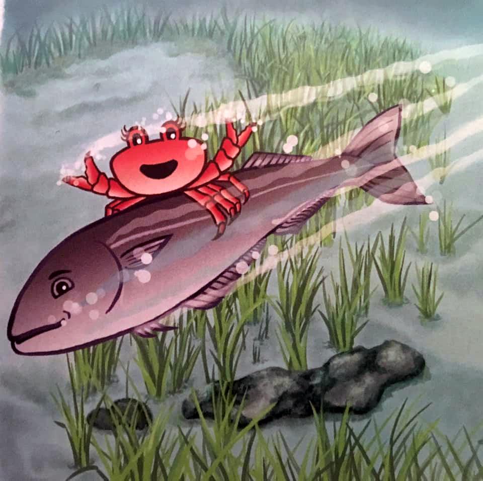 Bilderesultat for krabben klara og konkylien