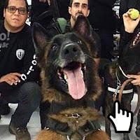 https://www.ahnegao.com.br/2018/04/o-mais-novo-cachorro-da-policia-a-conquistar-a-internet.html