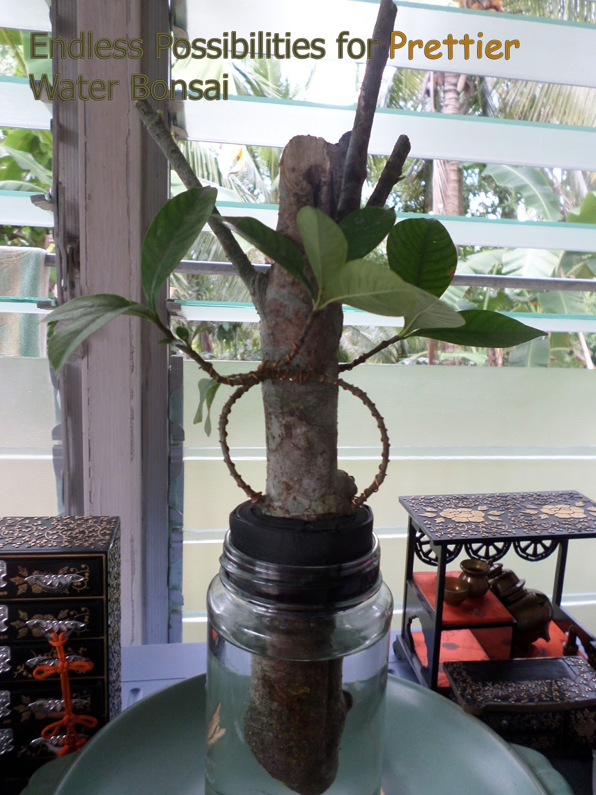 FDLS Online Magazine Amazing Vase Water Bonsai Update