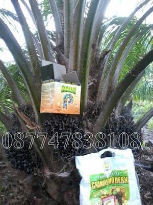 pupuk perangsang buah kelapa sawit
