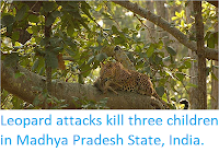 http://sciencythoughts.blogspot.co.uk/2018/01/leopard-attacks-kill-three-children-in.html