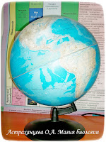 глобус, модель Земли, школа, география