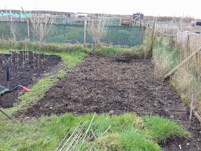 Allotment Growing - Strawberries