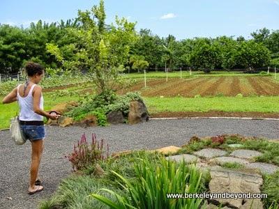 gardens at The Garden Cafe at Common Ground in Kilauea, Kauai, Hawaii