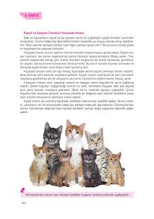 8. Sınıf Fen Bilimleri Ders Kitabı Cevapları Tutku Sayfa-155