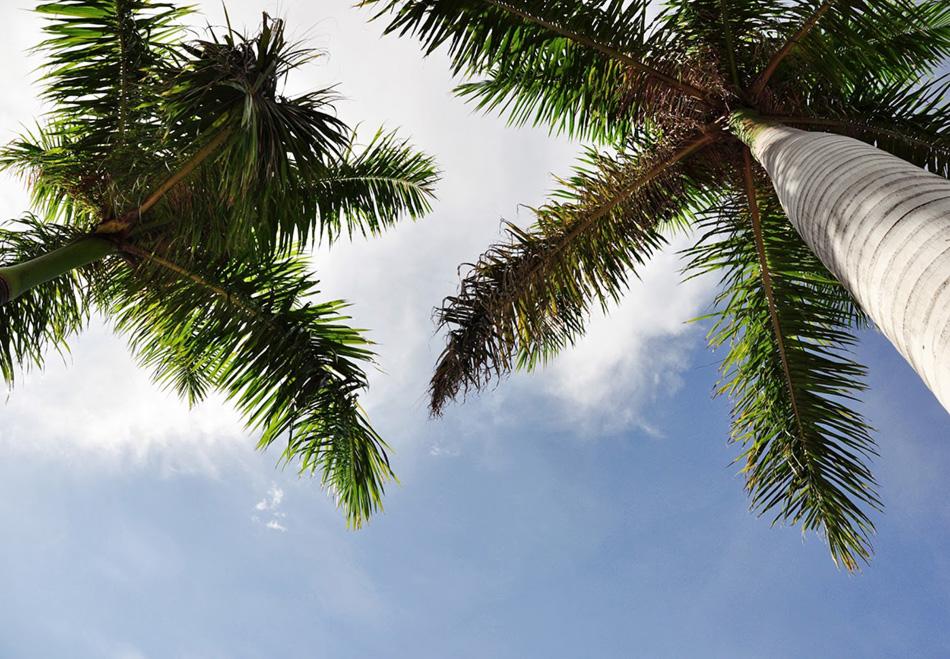 co zwiedzić | co zobaczyć | informacje praktyczne | Floryda